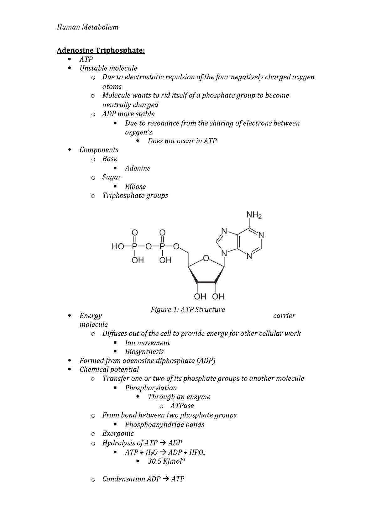 Adenosine Triphosphate Lecture Notes Human Metabolism Studocu