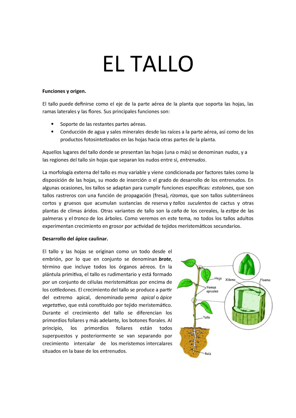 El Tallo Bch Biología Universidad De Córdoba 100406