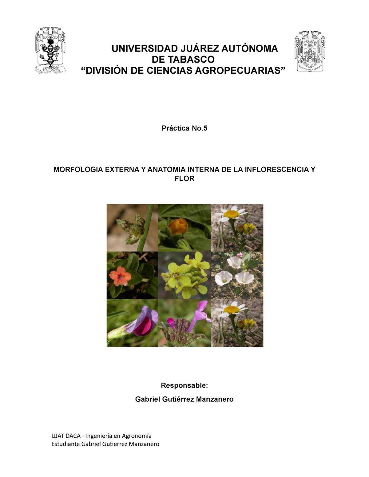 Practica 5 Botanica Morfología Externa Y Anatomía Interna