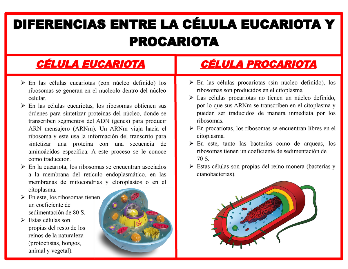 Cuadro Comparativo Entre La Celula Eucariota Y Procariota Studocu