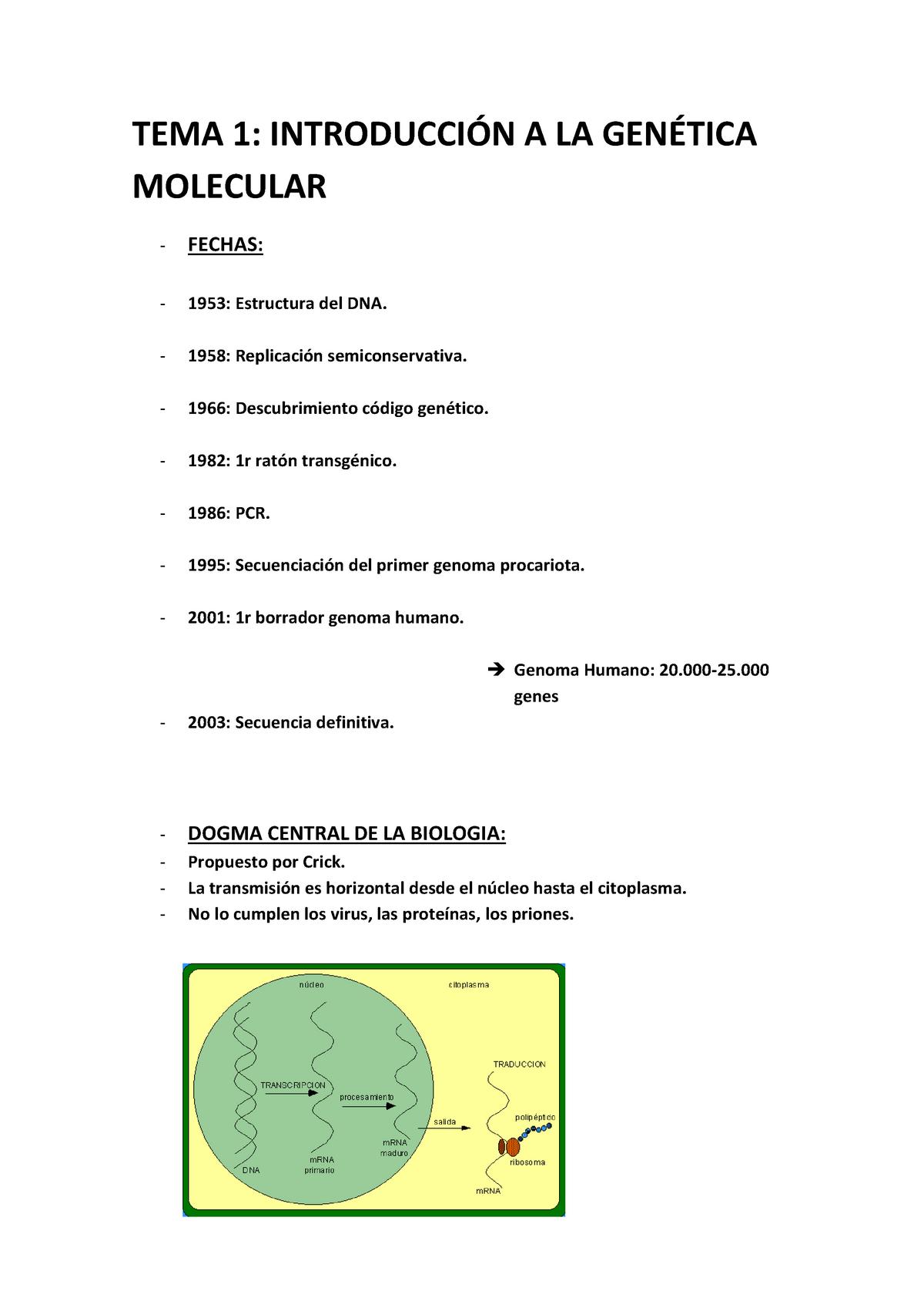 Apuntes Lecciones 1 5 Genètica Molecular 100776 Uab