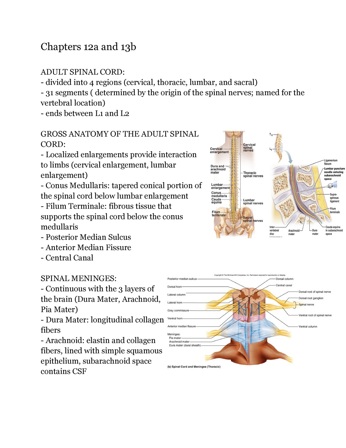 A P Ch 12 13 Notes Phsl P 263 Studocu Lateral extensions of the pia mater and arachnoid mater between the dorsal and ventral roots attach to the dura mater and are called denticulate ligaments. a p ch 12 13 notes phsl p 263 studocu
