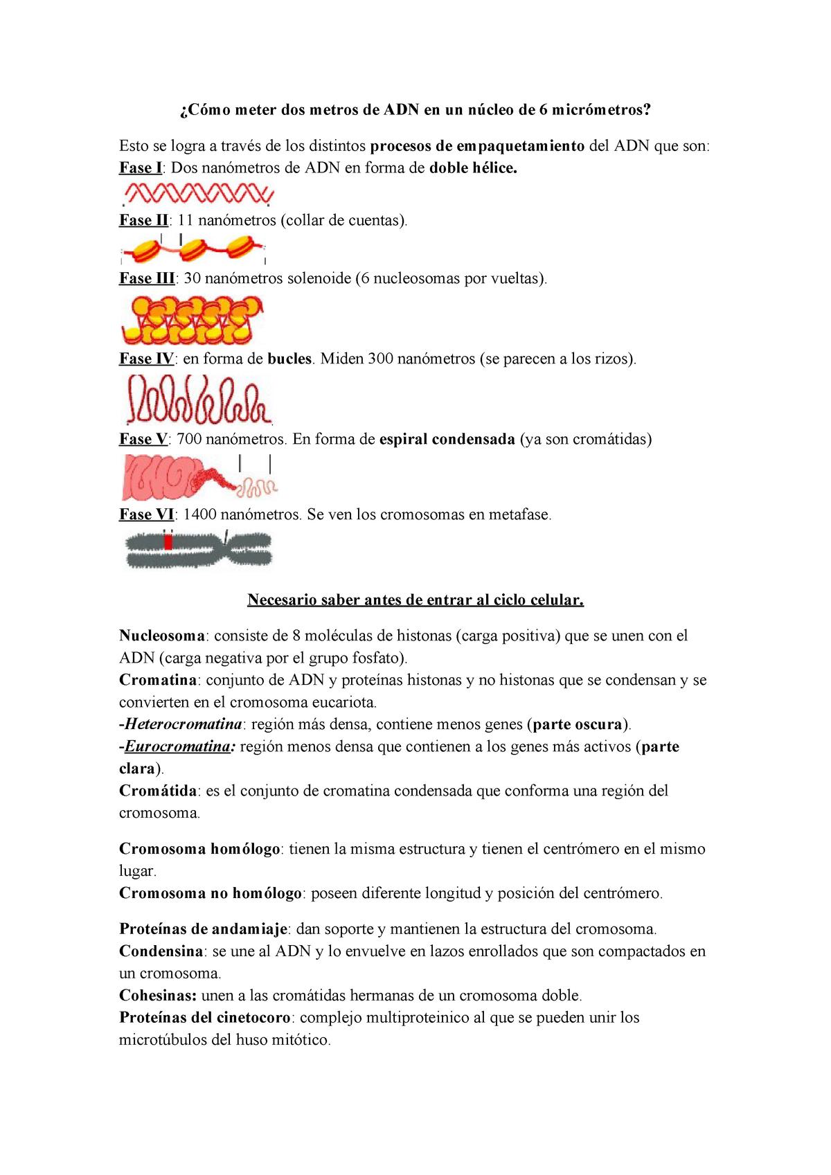 Generalidades Resumen Biología Ii Bio 112 T Pucmm