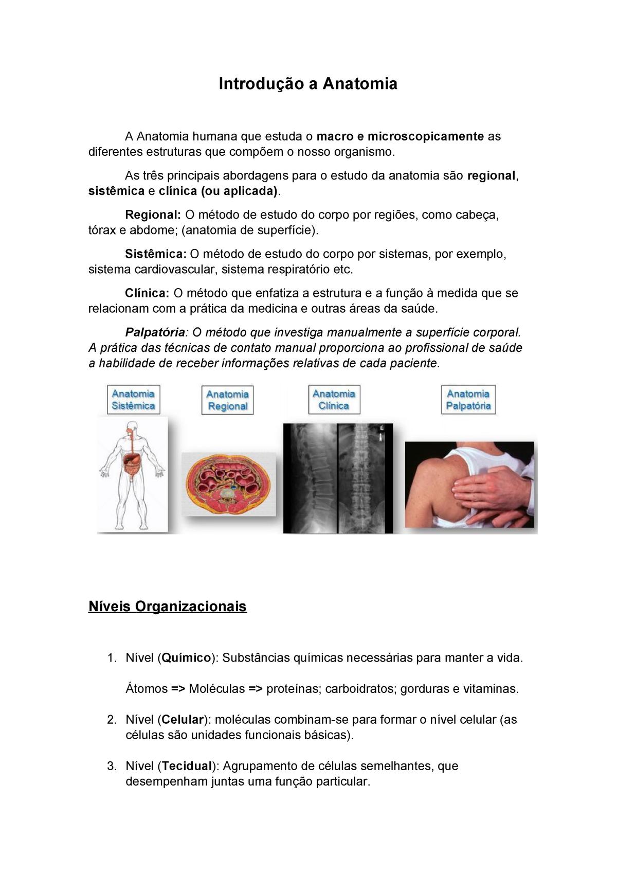 Introducao A Anatomia Grd6987 Estácio Studocu