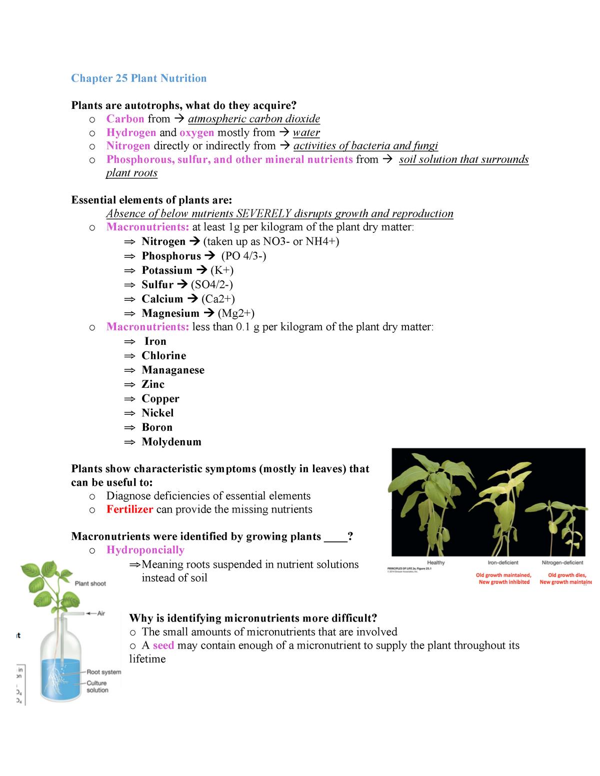 Chapter 25 Plant Nutrition From The Anatomy Prospective Studocu