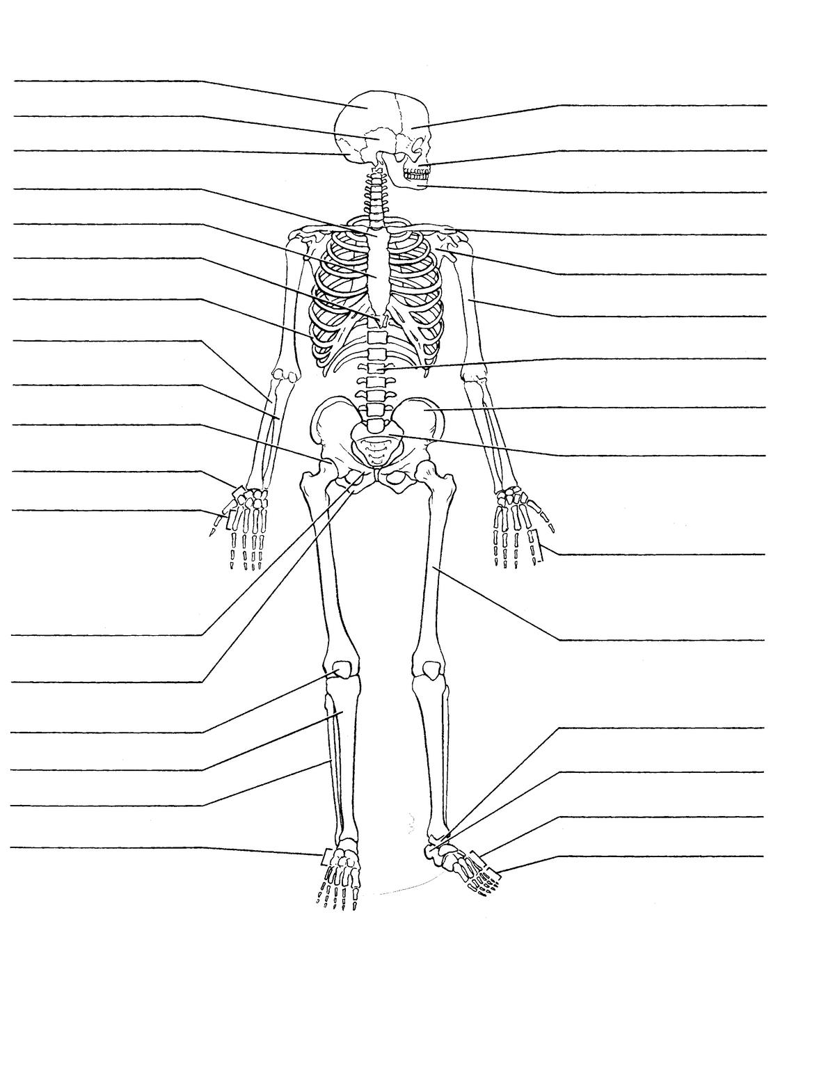 14. Skeletal system diagrams - unlabelled - StuDocuStuDocu