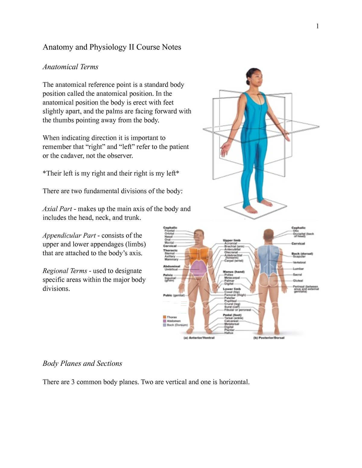 Anatomy and Physiology I Course Notes - ANP1105: Human