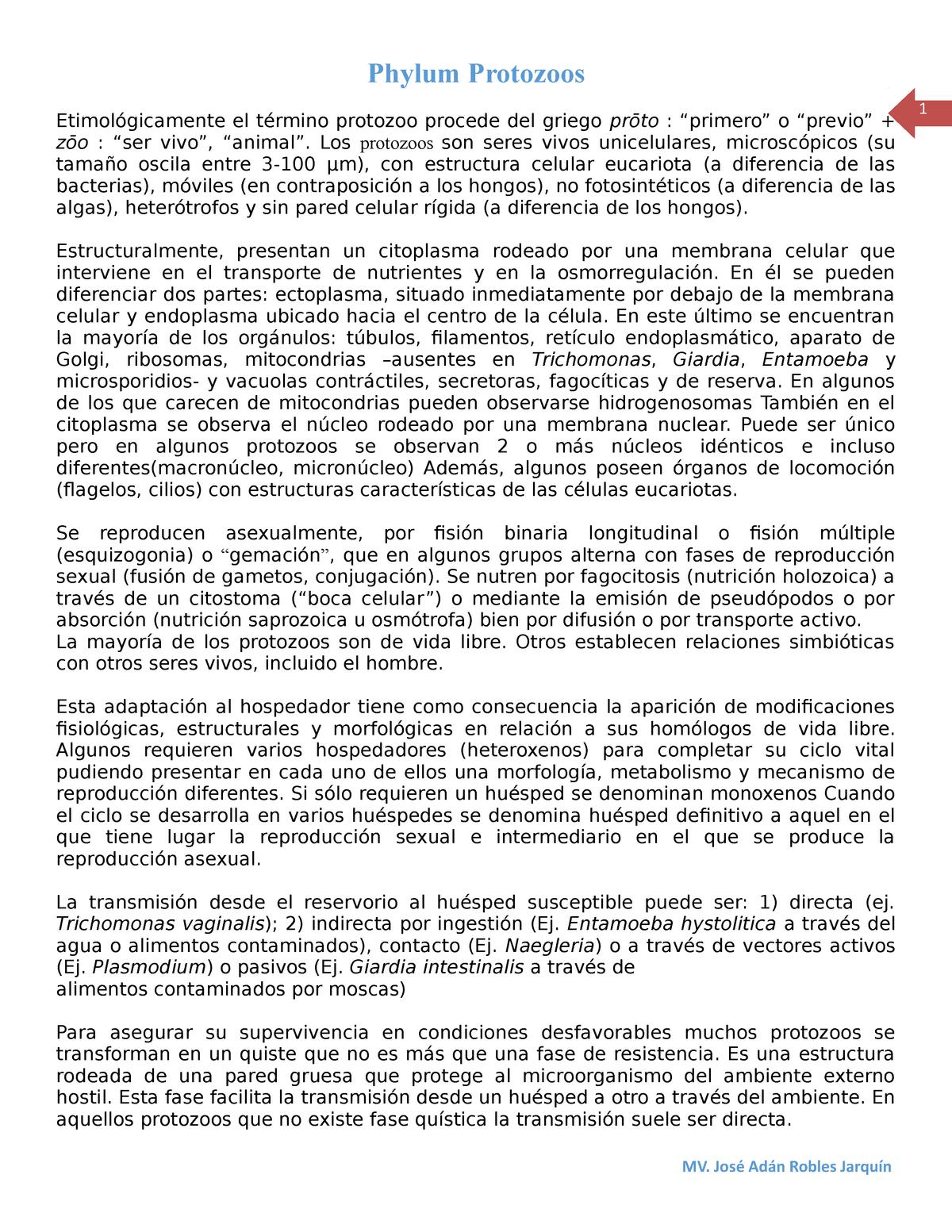 Protozoos Zoologia El Presente Documento Presenta