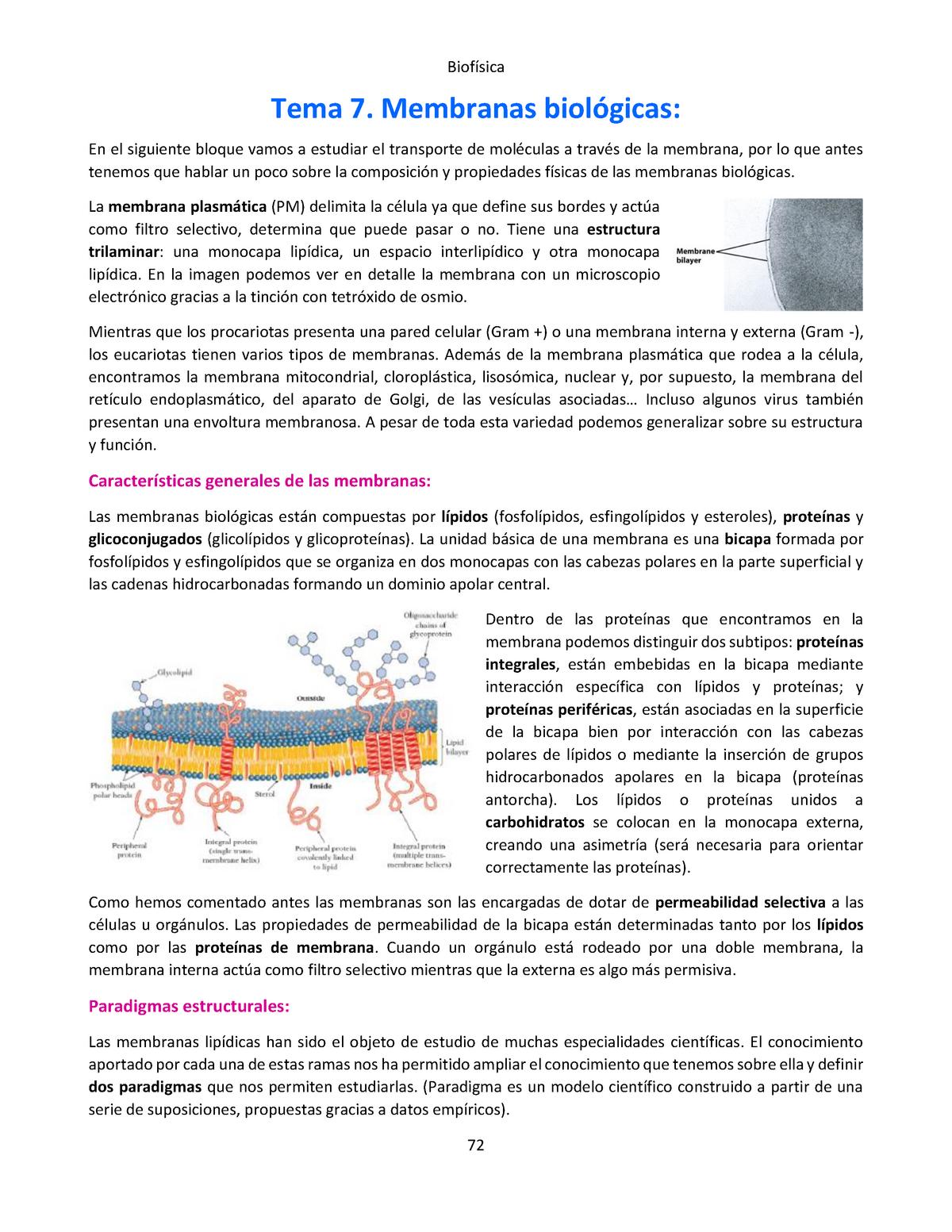 7 Membranas Biológicas Biofísica Upv Studocu