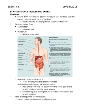 Biopsychology Exam 2 And 3 Lecture Notes Psy 0505 Introduction To
