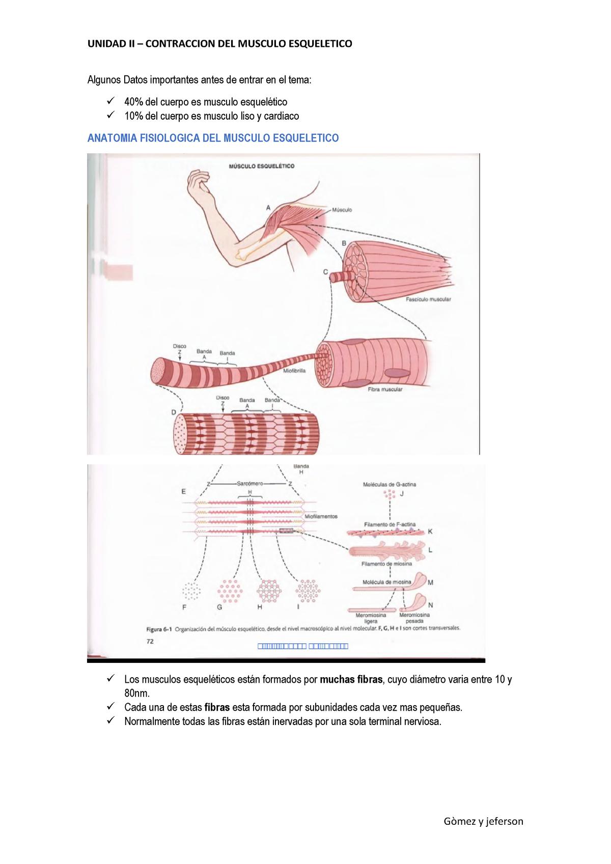 Resumen Capitulo 6 Contraccion Del Musculo Esqueletico