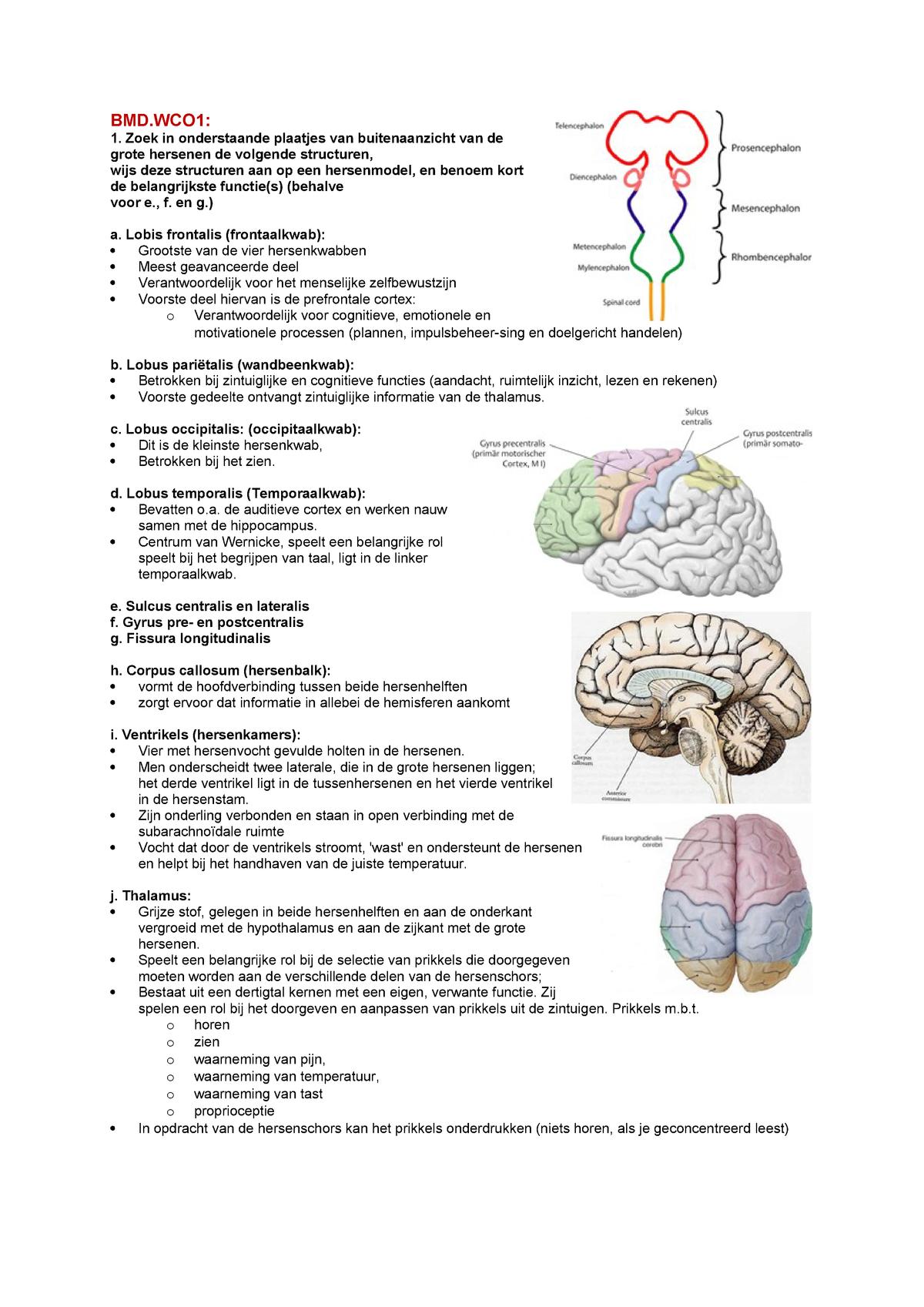 Aantekeningen Werkcollege Bmd1a Biomedisch Studeersnel