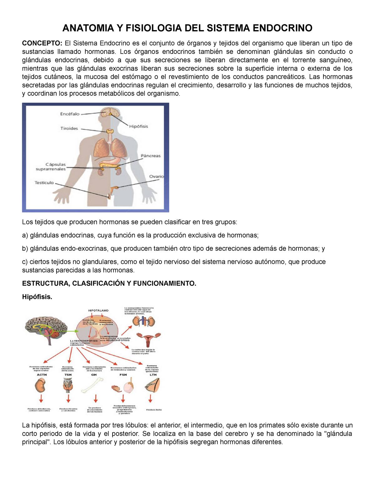 prediabetes fisiología del cerebro