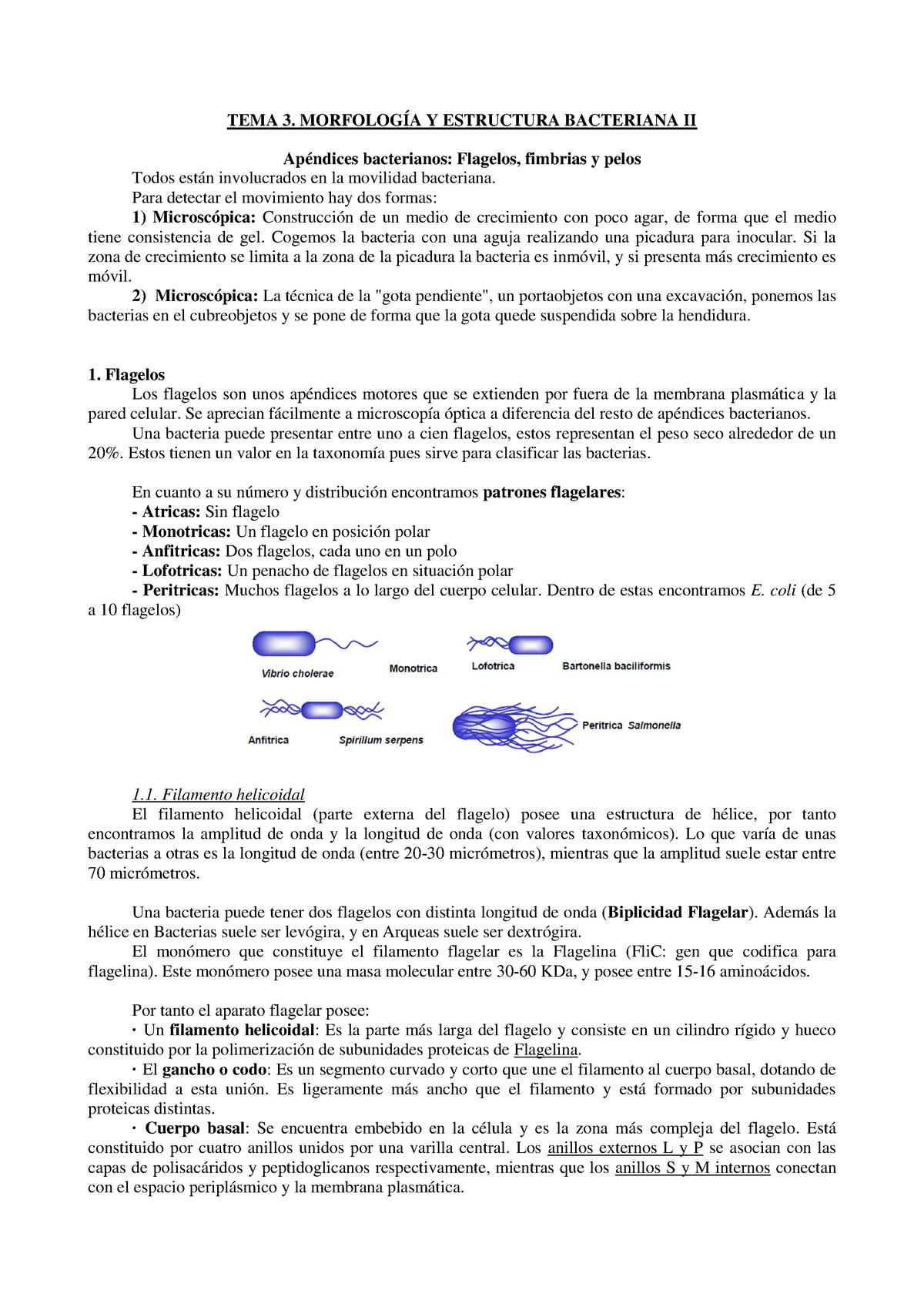 Tema 3 M Microbiologia Ucm Studocu
