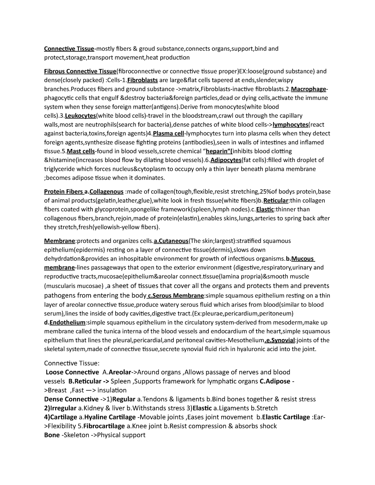 Connective Tissue - Anatomy - BIO 181: Anatomy And Physiology I