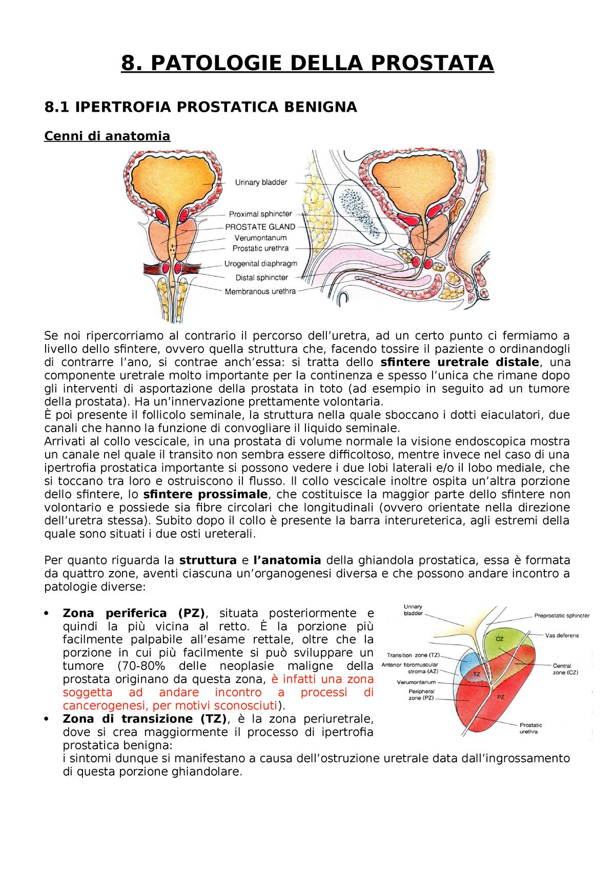 tipi di cellule della prostata