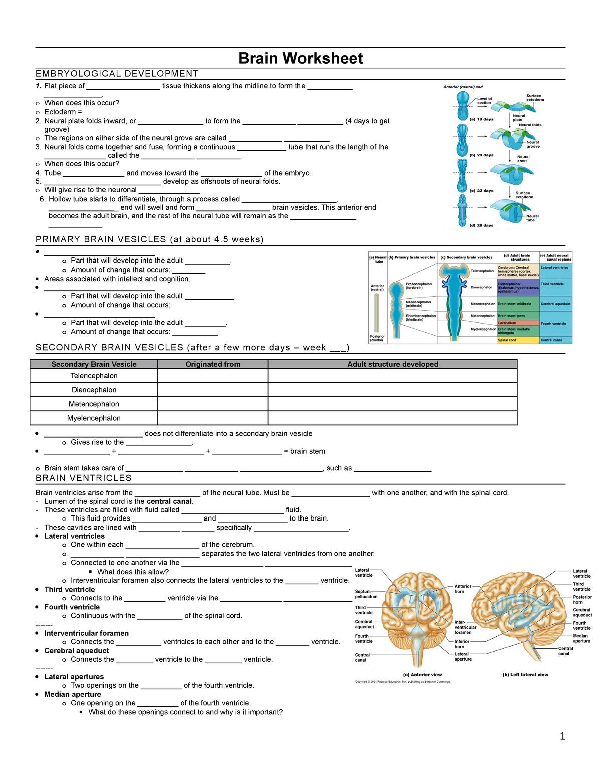 AP 2 Final Exam Consolidated PAL - BIOL 222 - StuDocu