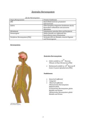 Zentrales Nervensystem Wi Se 17 18 - Anatomie und Physiologie I