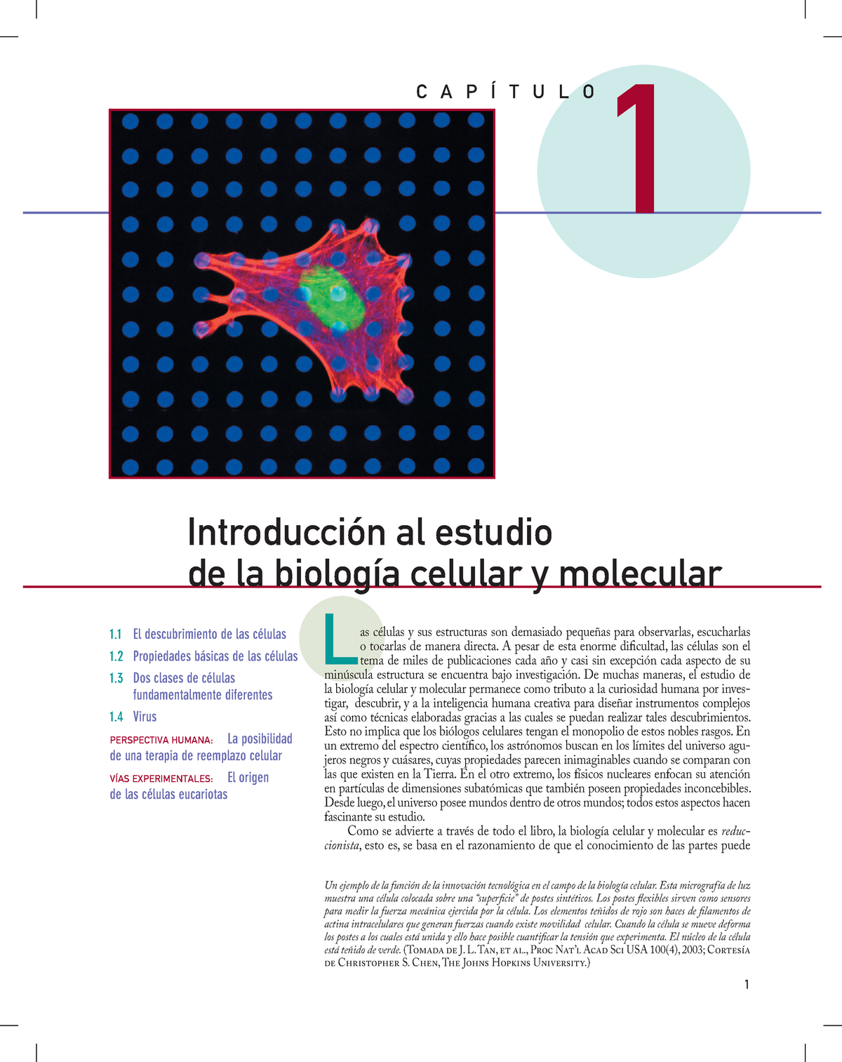 diabetes tipo 2 biología celular introducción