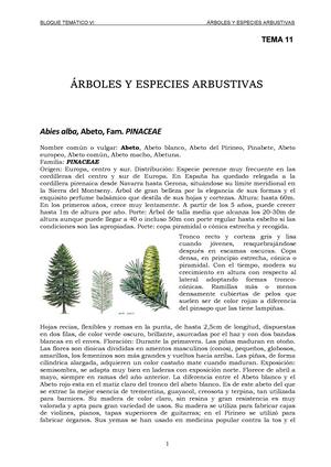 TEMA 11 - Arboles Y Especies Arbustivas - 25153304: Jardinería y ...