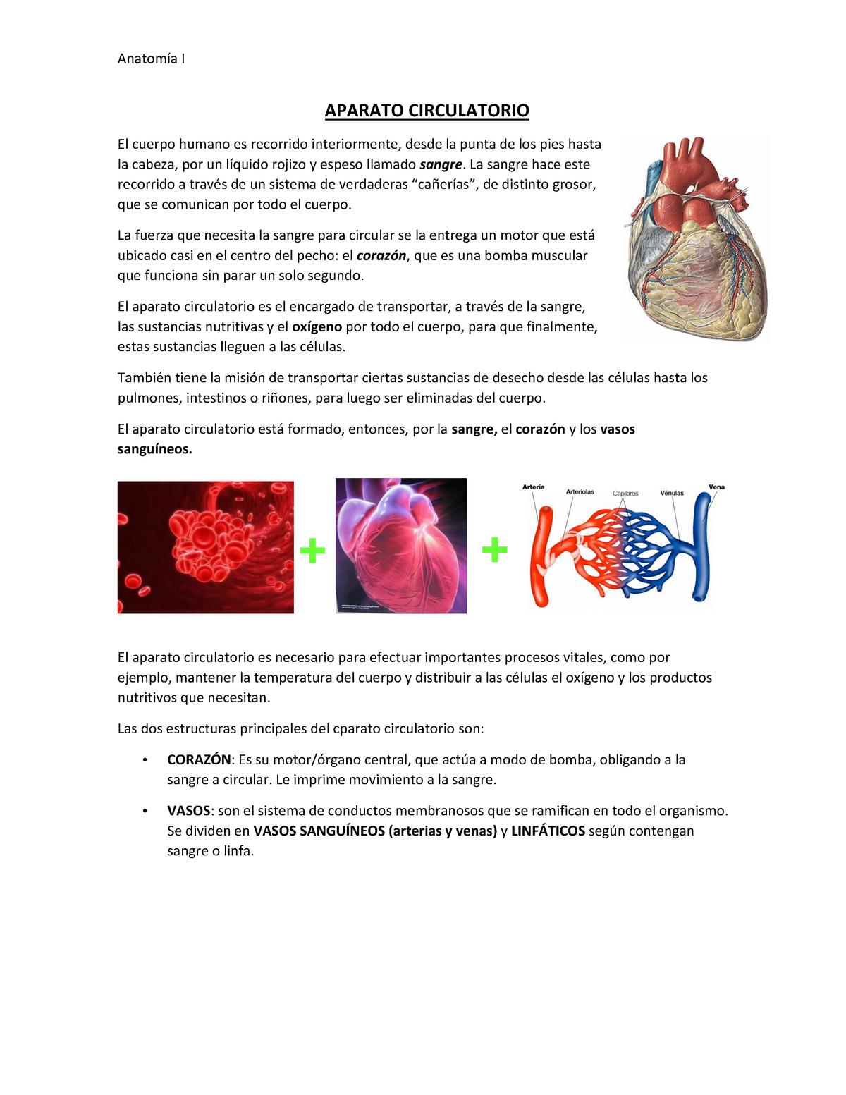 Sangre sistema circulatorio de la humano recorrido