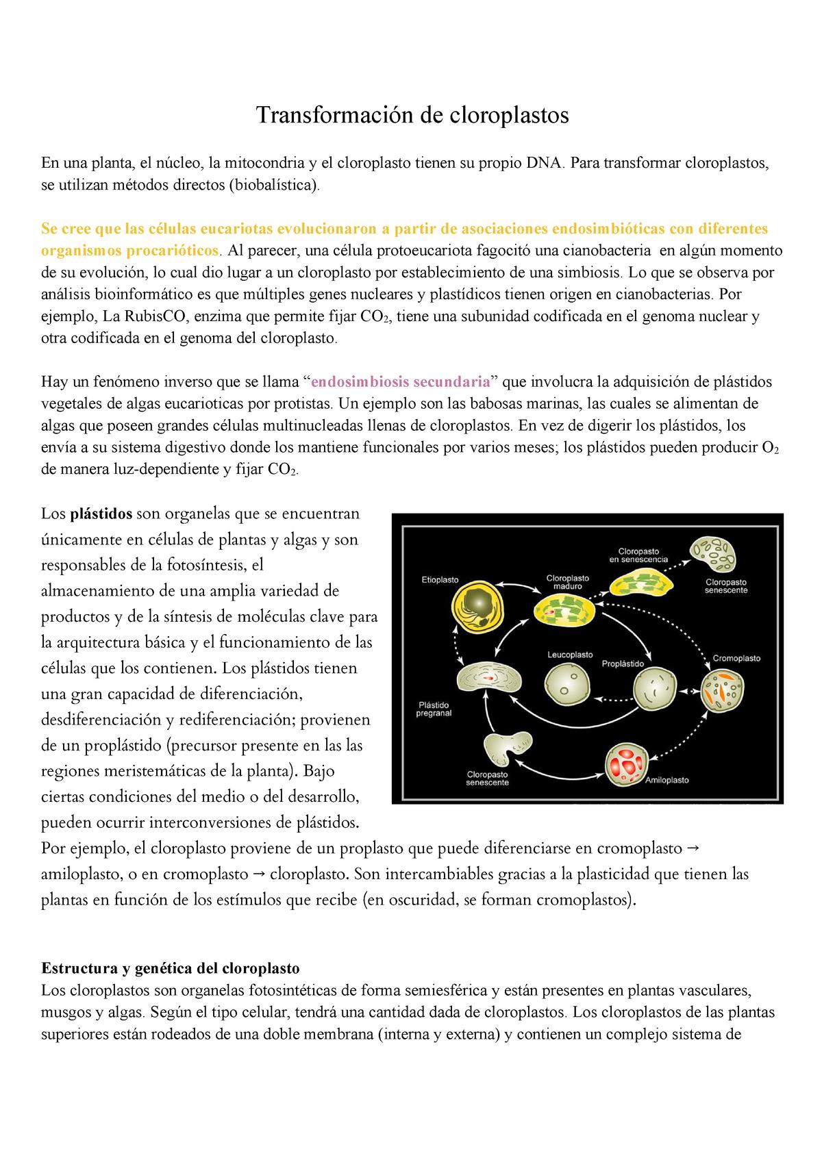 03 Transformación De Cloroplastos Biotecnología Vegetal