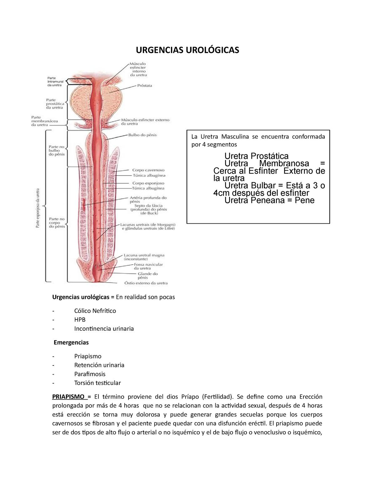 erección con fístula secreción uretral