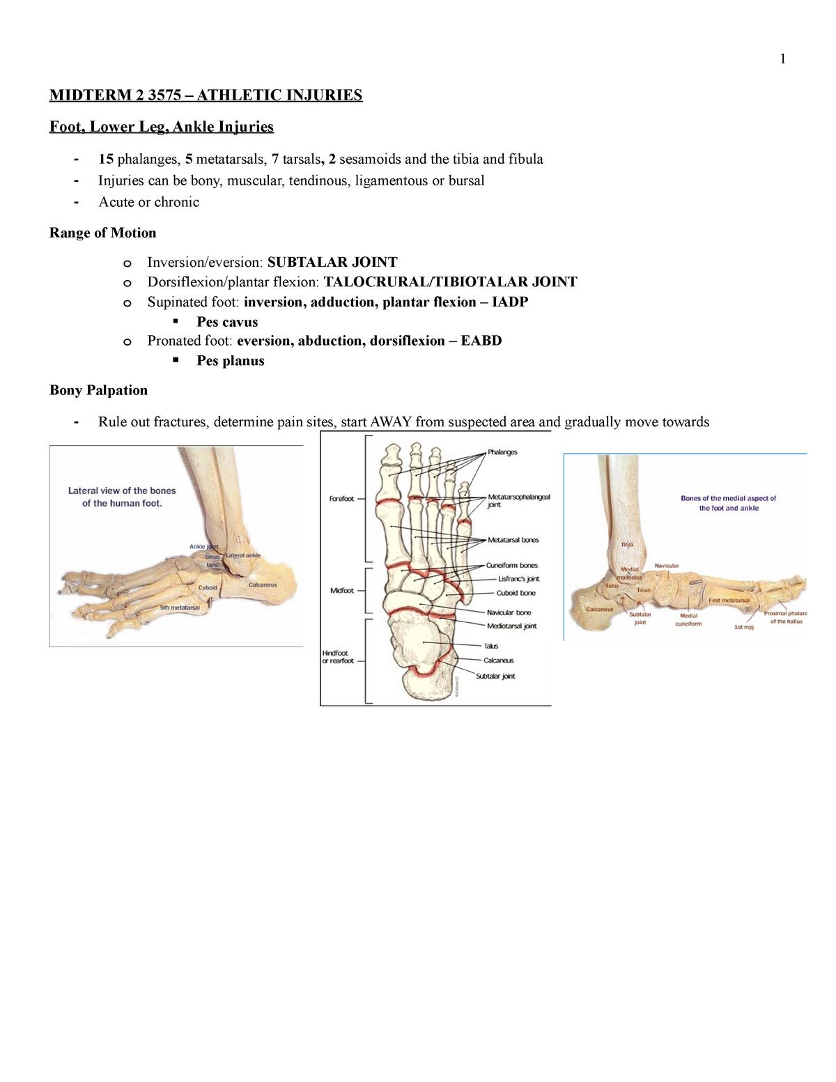Midterm 2 3575 - KINE 3575: Athletic Injuries Extremeties - StuDocu