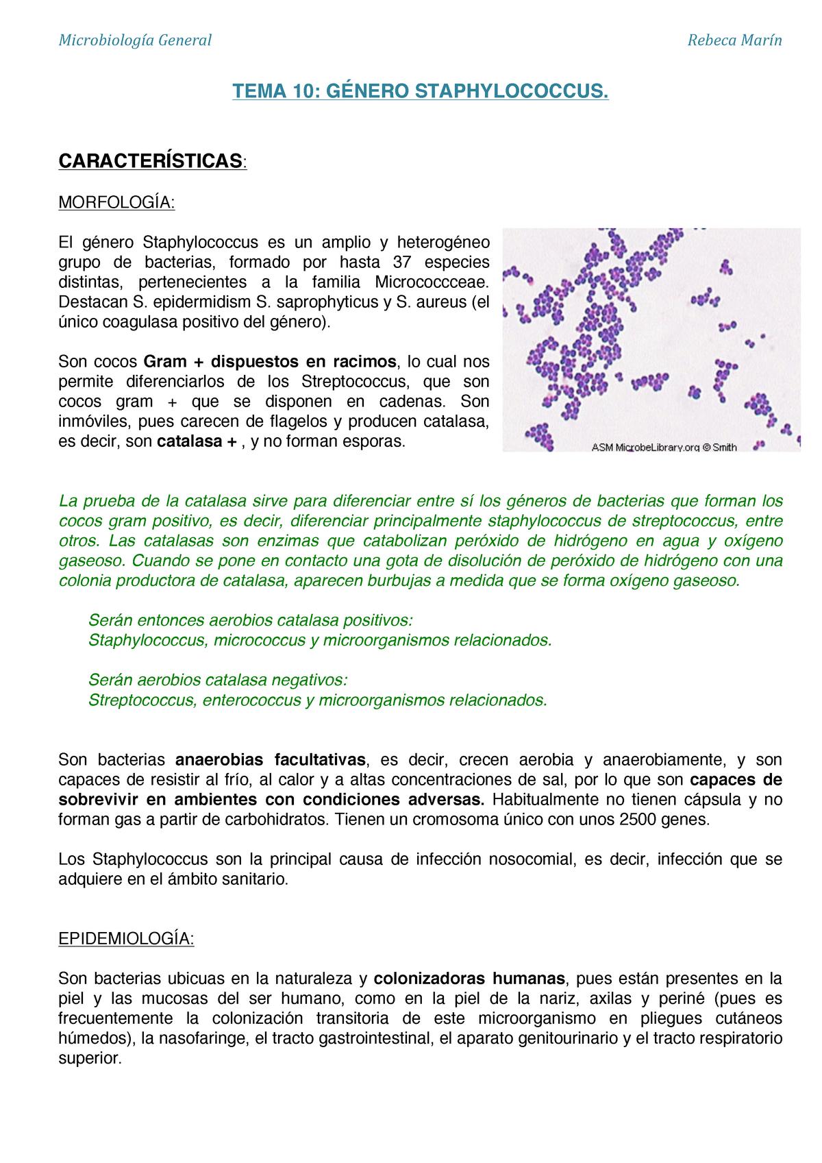 prueba de catalasa bacterias