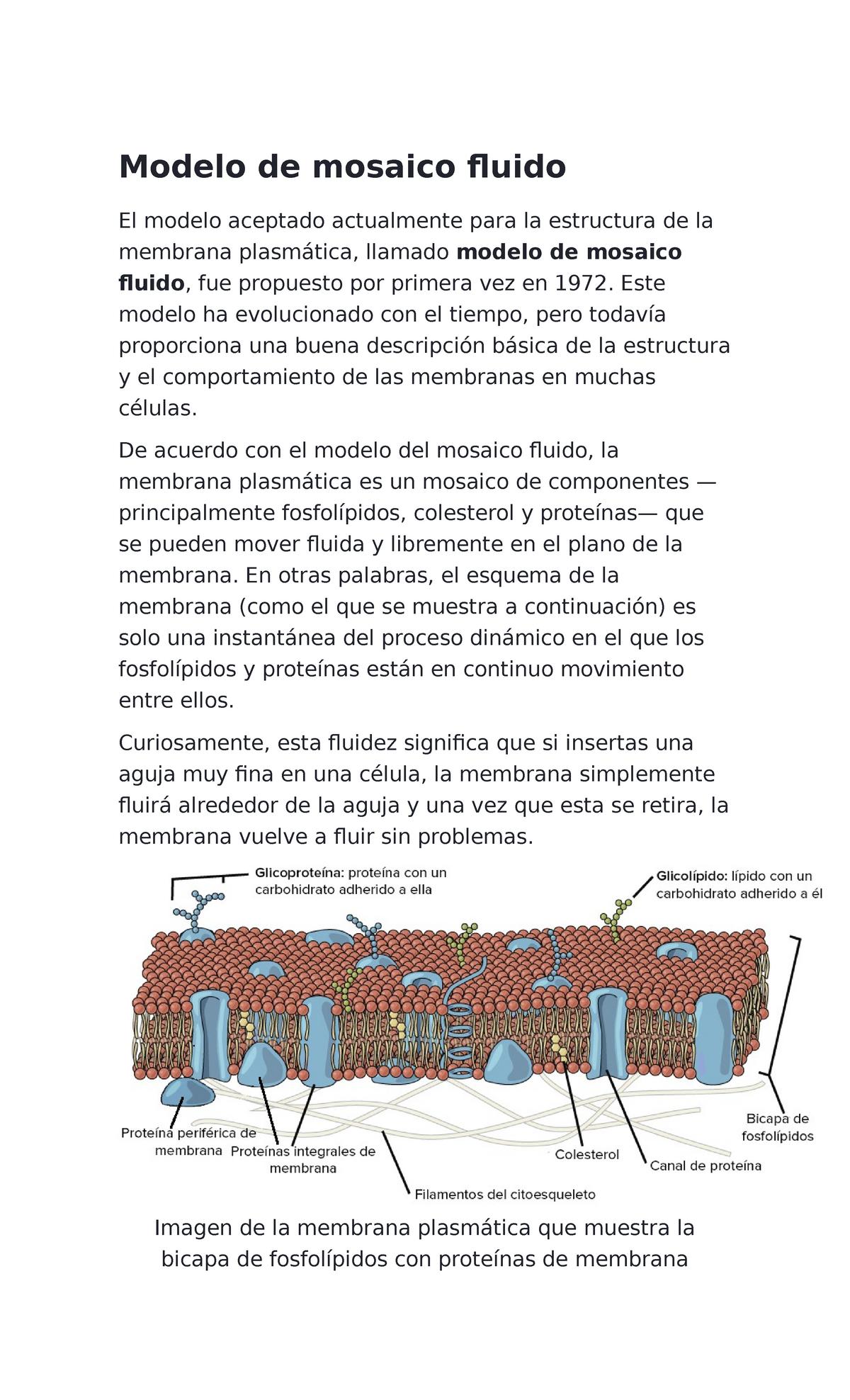 2do Parcial Membranas Biología 58745 Studocu