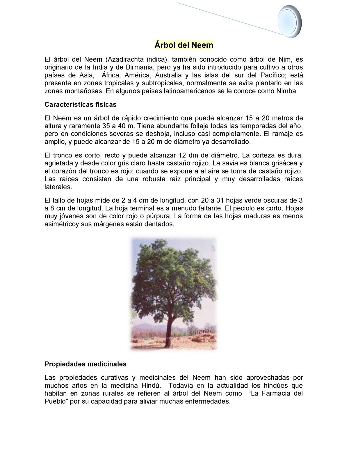 Arbol de neem y sus propiedades curativas
