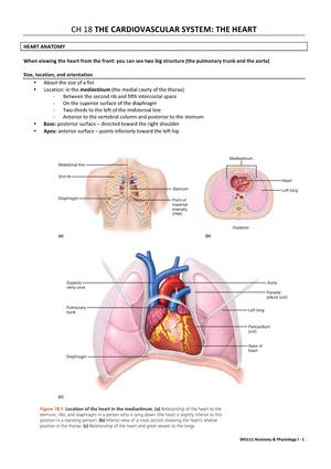 Summary The Cardiovascular System The Heart Ch18