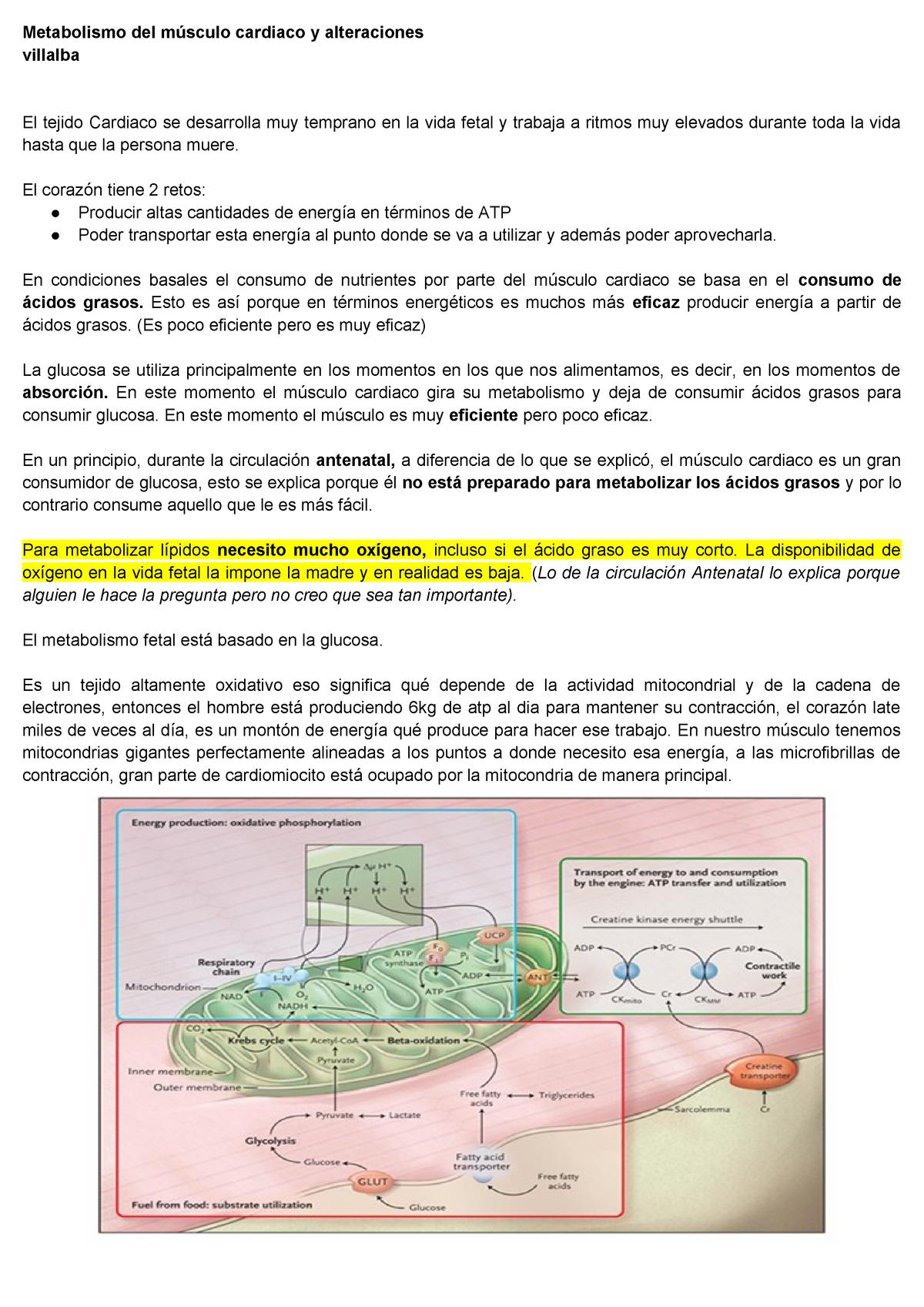 Refinar Punto de referencia A veces a veces  Metabolismo del músculo cardiaco y alteraciones - StuDocu