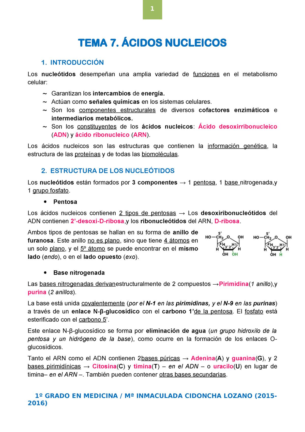 Tema 7 ácidos Nucleicos Bioquímica 9963001102 Uem Studocu