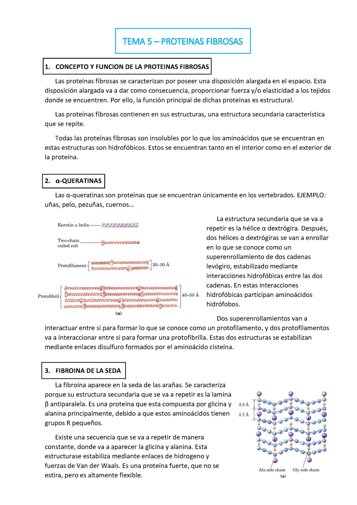 Tema 5 Proteinas Fibrosas Bioquímica 5287 Ubu Studocu