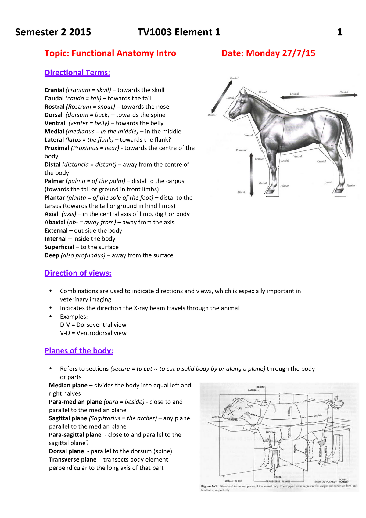 Lecture Notes Anatomy Embryology And Histologyelement 2