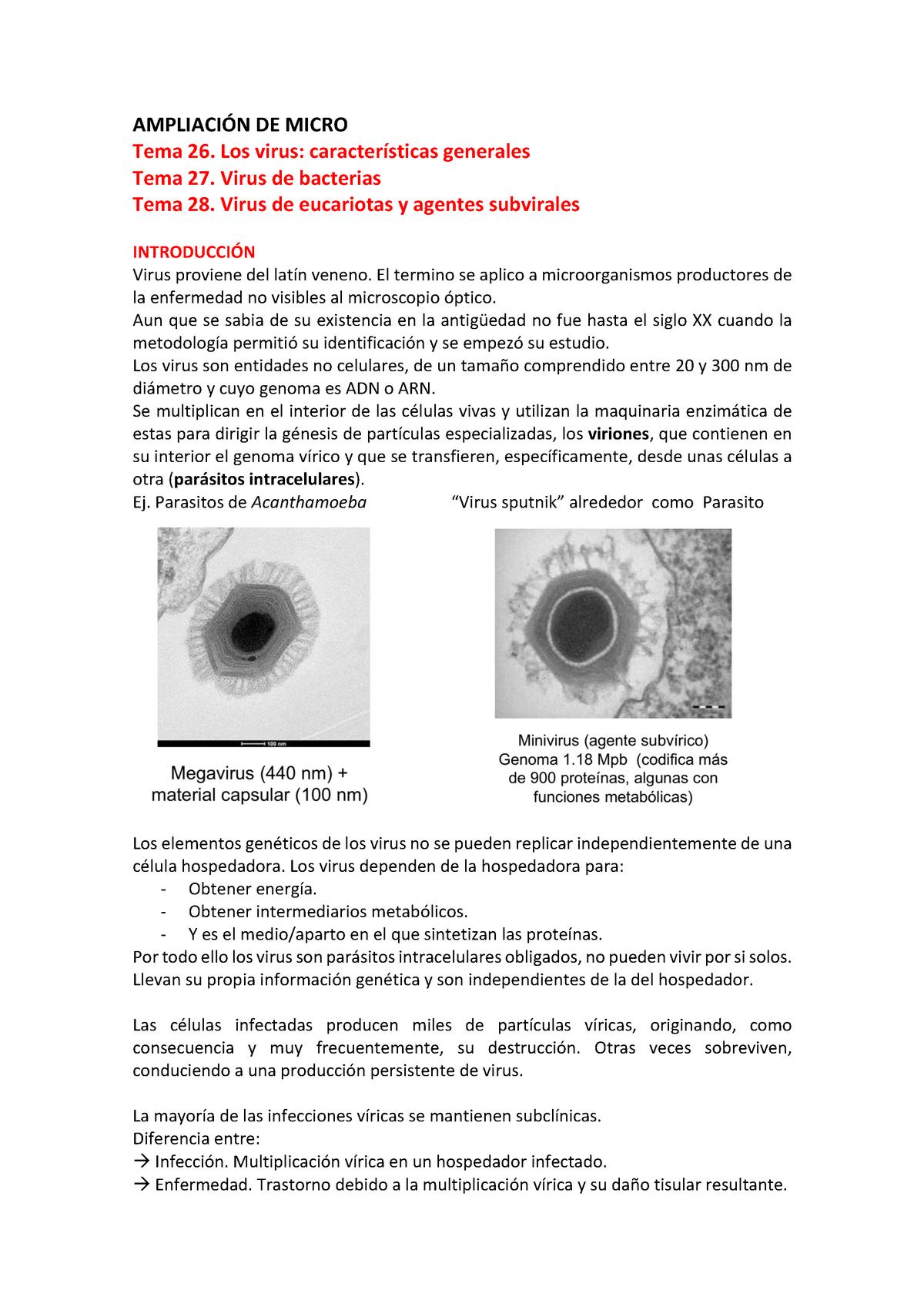 bacteria que es un parásito intracelular obligado