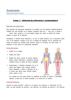 Anatomía (Documento Resumen) - 651001: anatomía humana - StuDocu