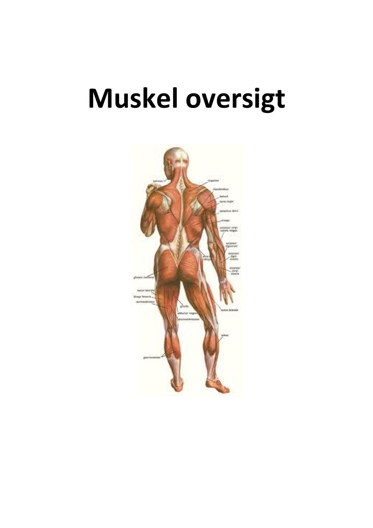 kroppens muskler på latin