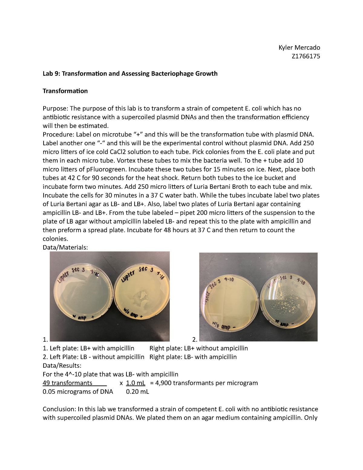 LAB 9 - BIOS 313 lab - BIOS 313 : Microbiology - StuDocu