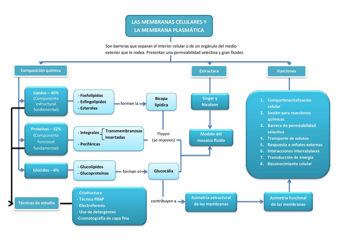 Mapa Conceptual Tema 2 I Biología Celular 202005 Upo