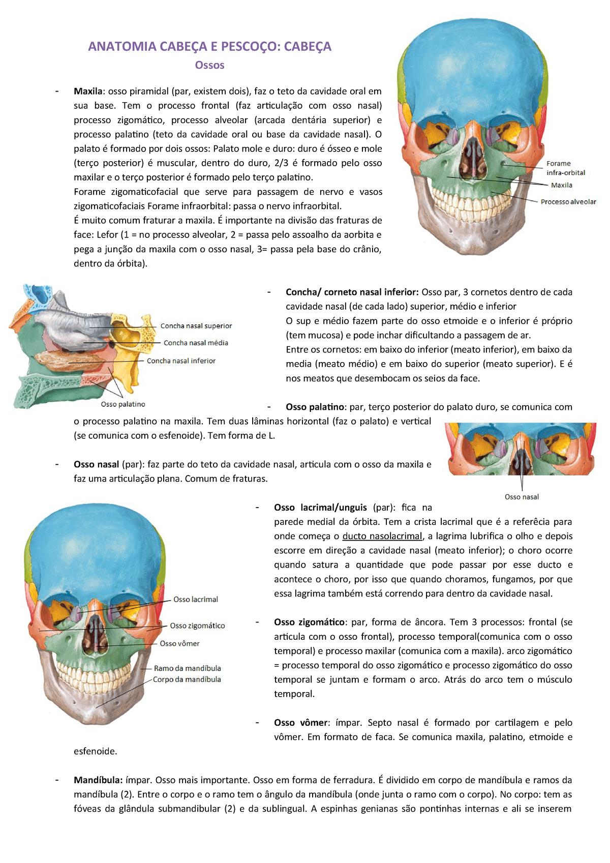 Anatomia Cabeça E Pescoço Ossos Mm Da Face E Boca Studocu