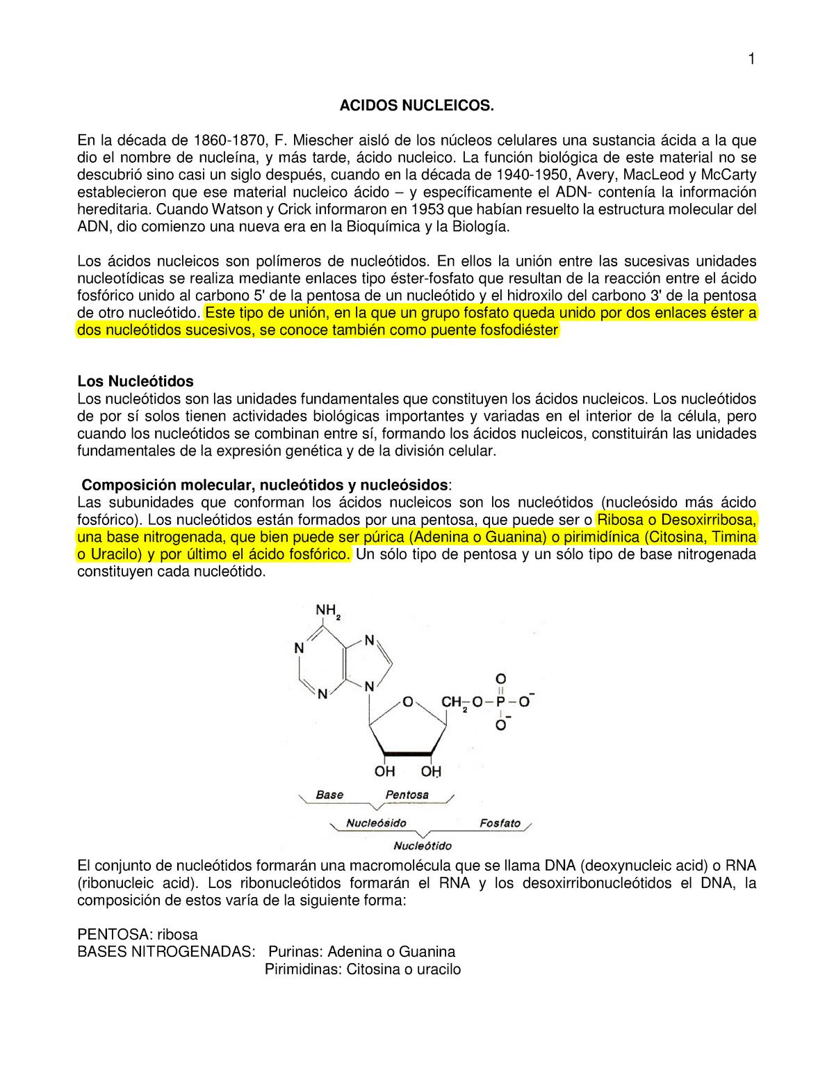 Acidos Nucleicos Colombia Contemporánea 2015229 Unal