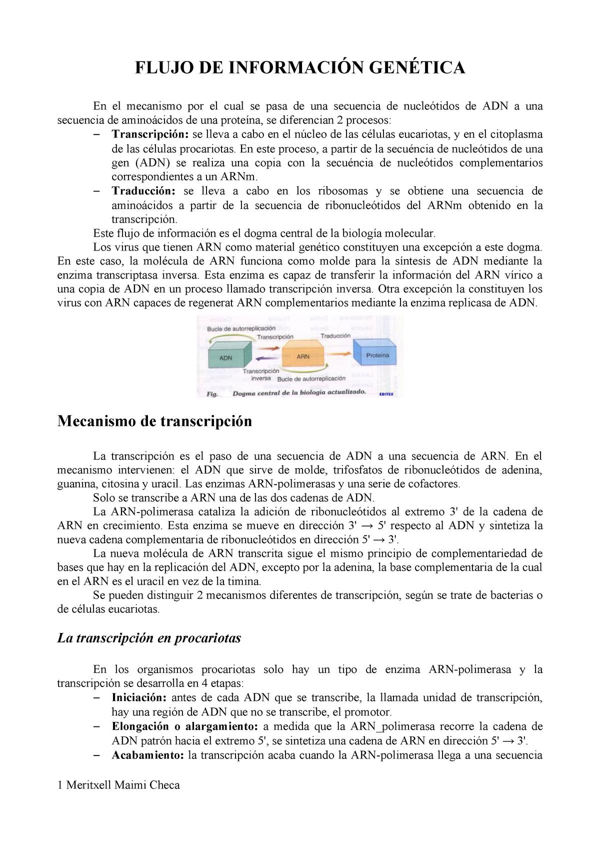 Flujo De Información Genética Biologia 34191 Uv Studocu