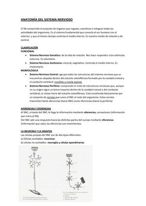 Apuntes completos de Anatomía del Sistema Nervioso - GMEDIC01-2-005 ...