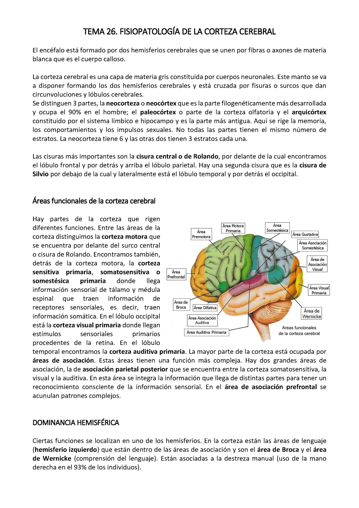 Area De Broca Y Wernicke Pdf Download