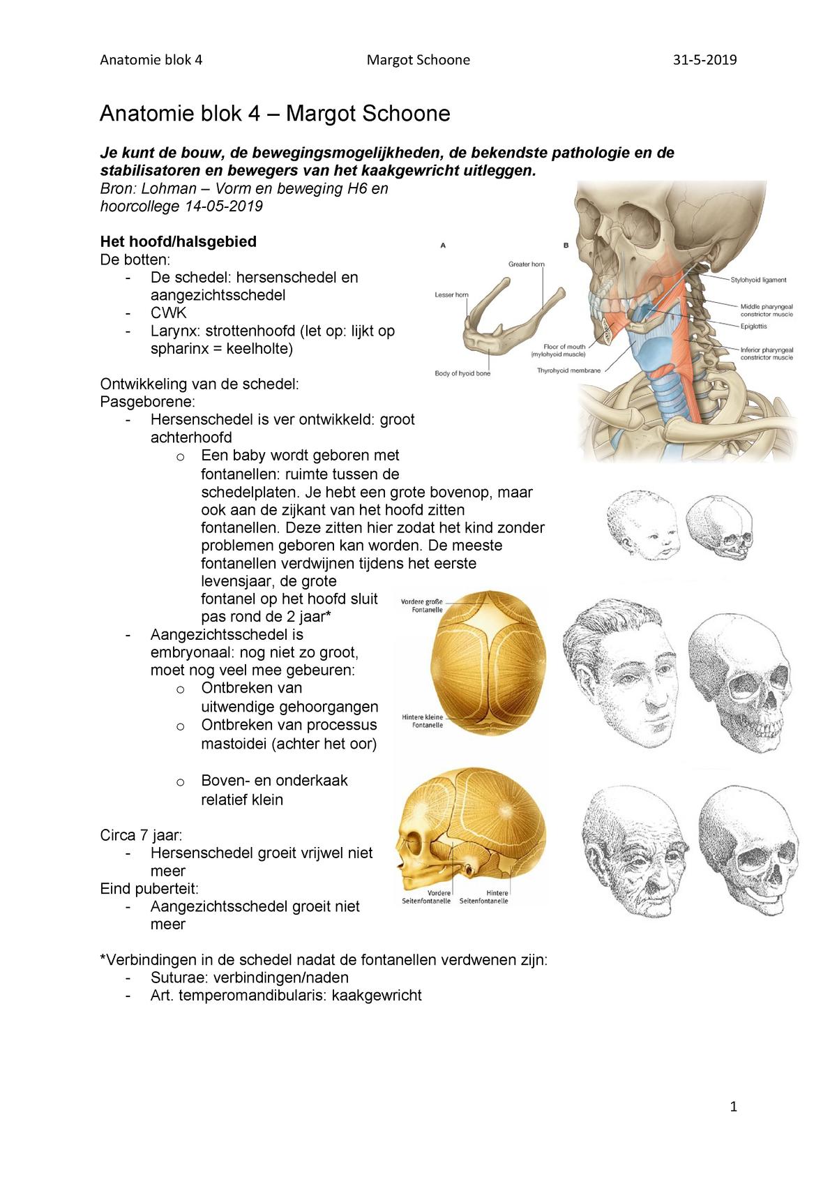 Samenvatting Anatomie Em2kt2 Han Studeersnel