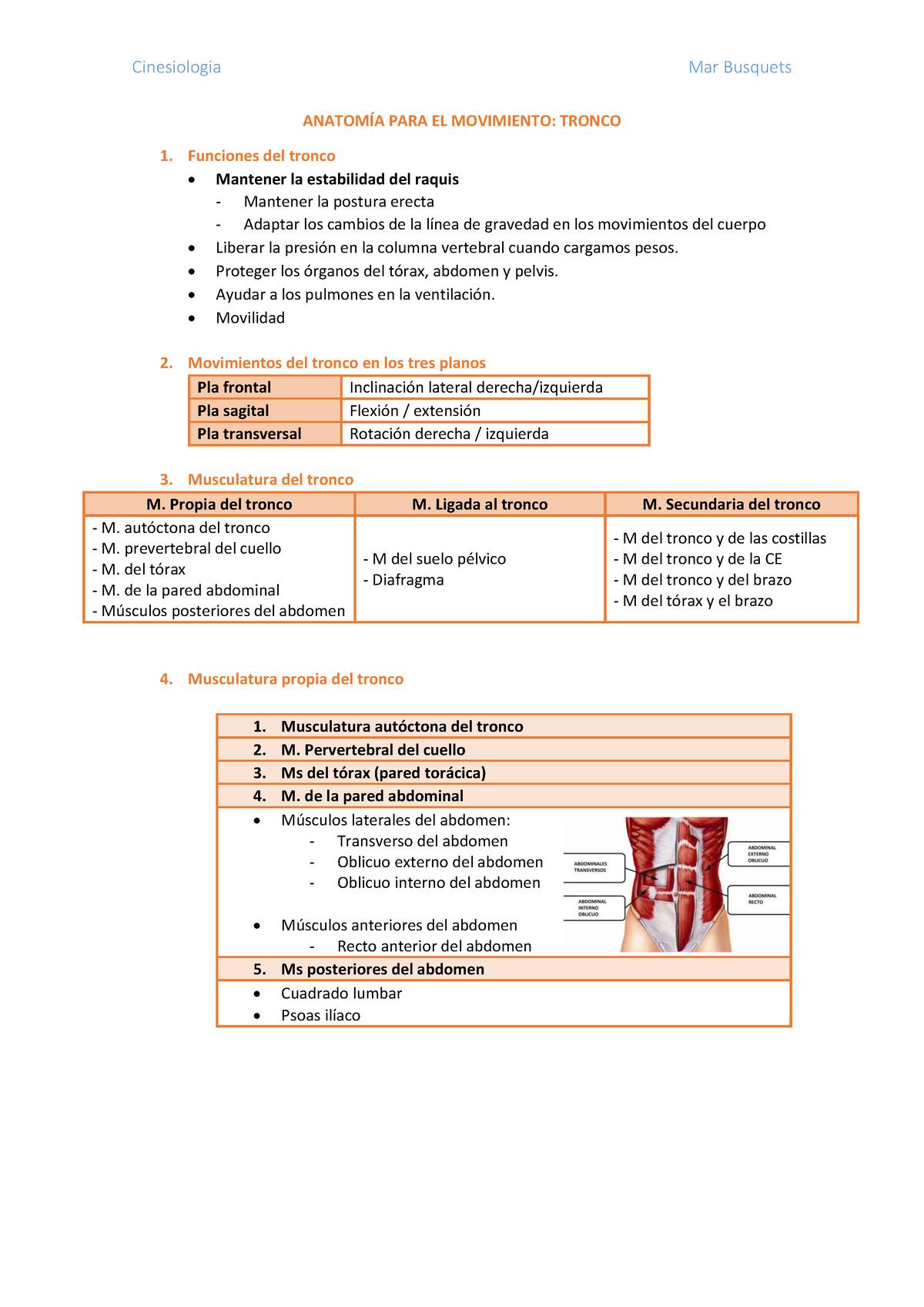 Flexion de tronco musculos