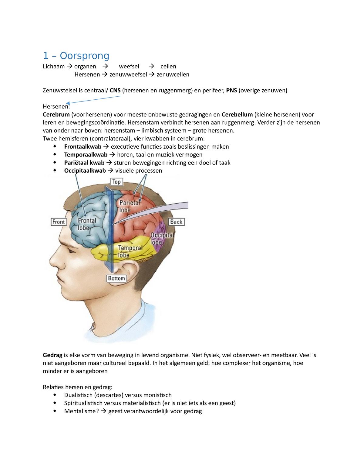 Hersenen En Gedrag Samenvatting Brain And Behavior