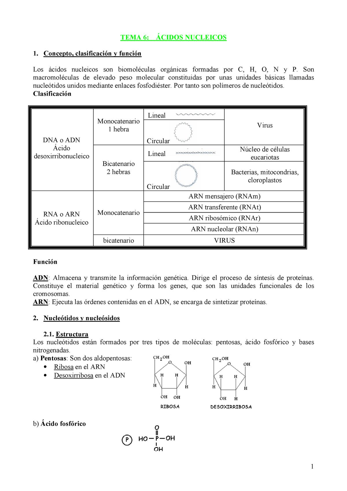 06 ácidos Nucleicos Química General 1029 Unlam Studocu
